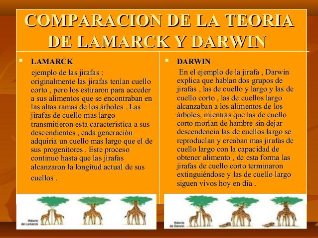 enfoque-de-lamarck-y-darwin-cientficos-de-la-evolucin-6-638