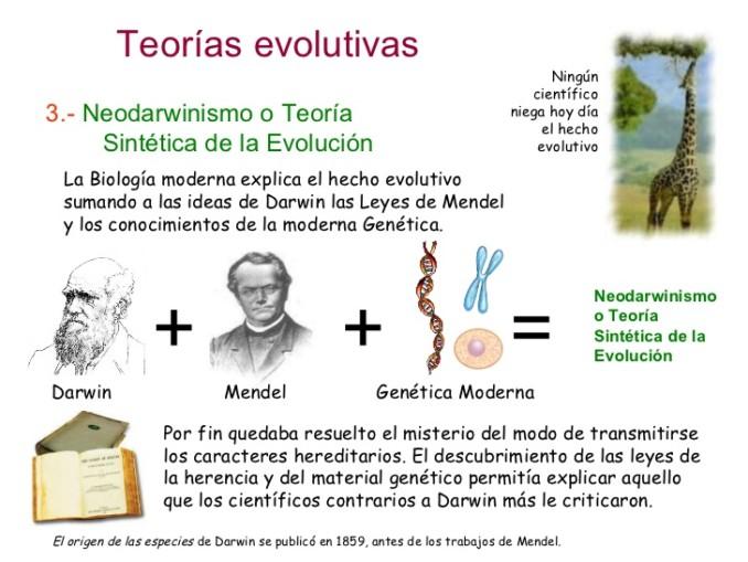 evolucin-3-teoras-evolutivas-25-728