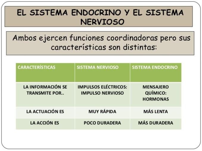 sistema-nervioso-y-endocrino-38-728