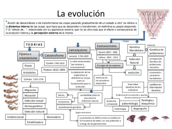 teoria-de-la-evolucin-1-728