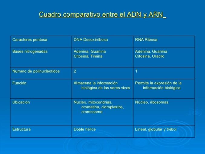 1-acidos-nucleicos-2011-44-728