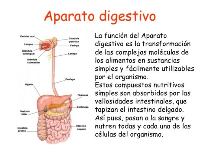 aparato-digestivo-introduccin-1-728