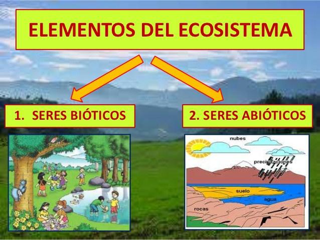 Cuadros comparativos sobre bioticos y abioticos cuadro for Elementos de jardineria