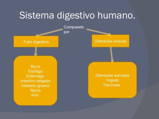 nutricion-en-el-ser-humano-14-728