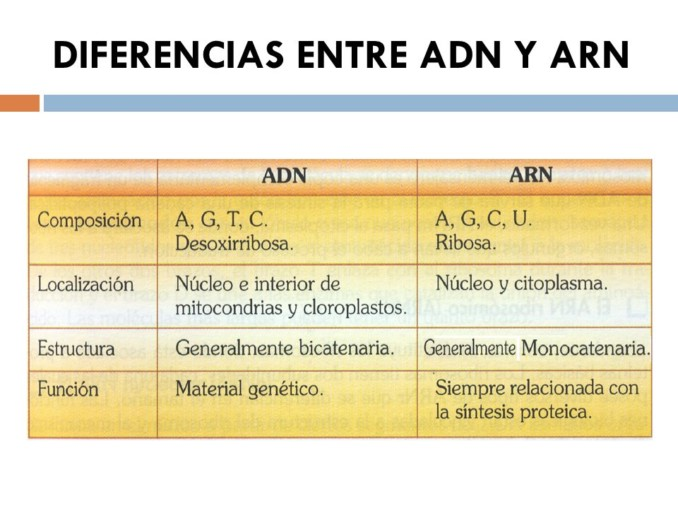 Adn y sus bases of dating 5