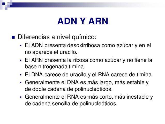 tema-5-cidos-nucleicos-33-638