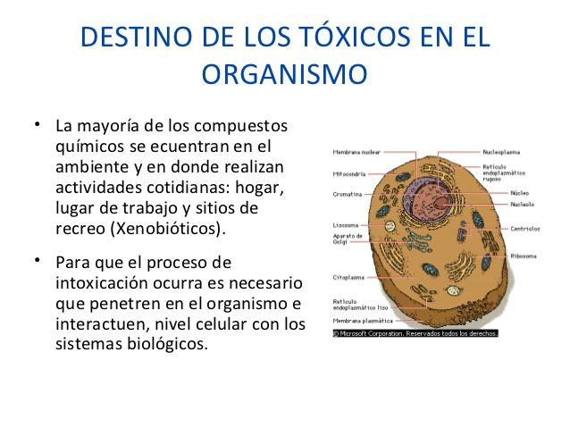 toxicologa-forense-2012-35-638