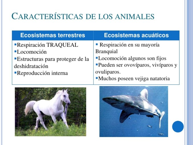 ecosistemas-terrestres-y-acuticos-6-728