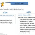 Cuadros comparativos entre ARN y ADN.