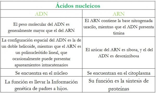 Cuadros Comparativos Entre ARN Y ADN