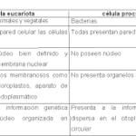 Cuadros comparativos : Diferencias entre células procariotas y eucariotas