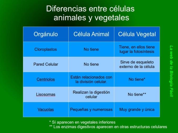 cuadros  parativos entre celulas animales y vegetales