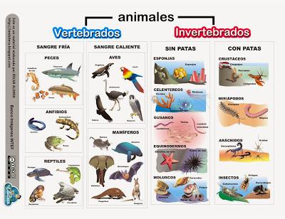 Cuadros comparativos entre animales vertebrados e for Cuales son las caracteristicas de un mural