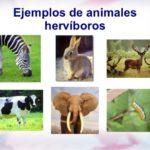 Características y diferencias entre los animales herbívoros y carnívoros
