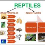Cuadros comparativos, características, diferencias y similitudes entre reptiles y anfibios