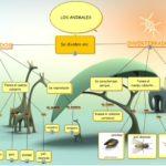 Cuadros comparativos y sinópticos entre invertebrados y vertebrados