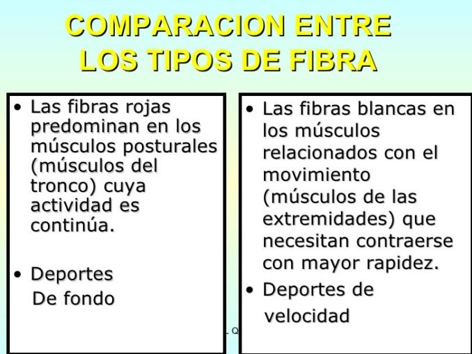 Cuadro comparativo de los músculos (tipos de fibras