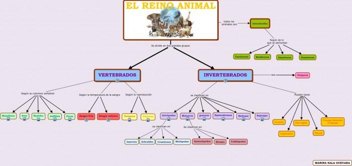 Cuadros sinópticos sobre reino animal o animalia | Cuadro Comparativo