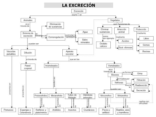 MAPA CONCEPTUAL EXCRECION