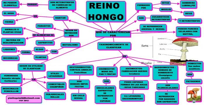 REINO HONGO.cmap
