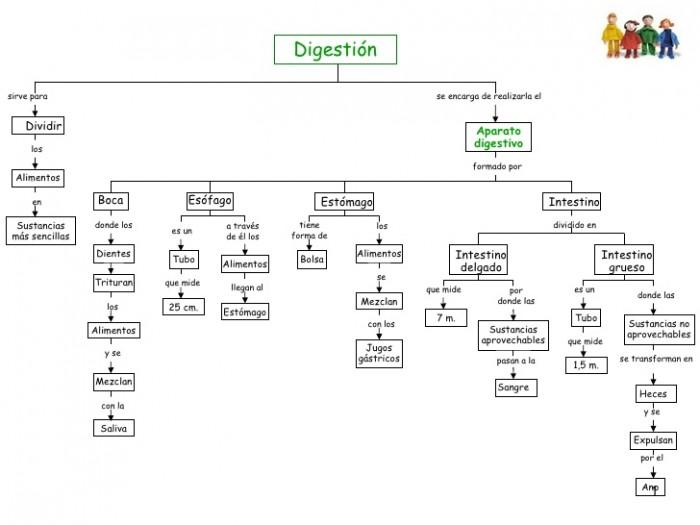 aparato-digestivo-1-728