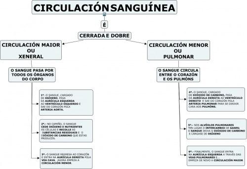 circulacic3b3n-sanguc3adnea-e1329935446457