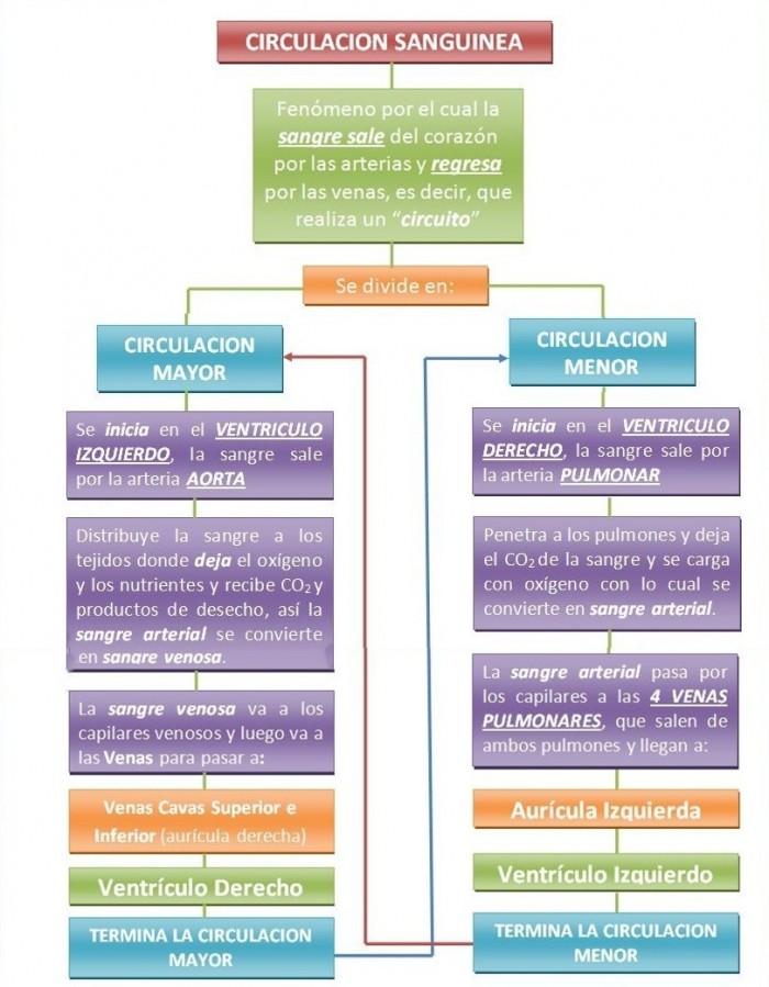Cuadros sinópticos sobre circulación sanguínea | Cuadro Comparativo