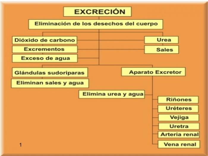 excrecin-1-728