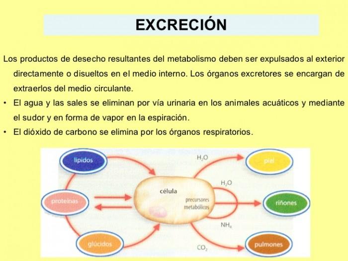 fisiologia-animal-excrecin-1-728