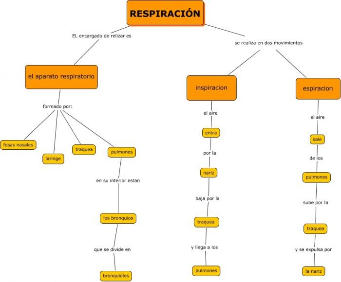 mapa-conceptual-respiracion