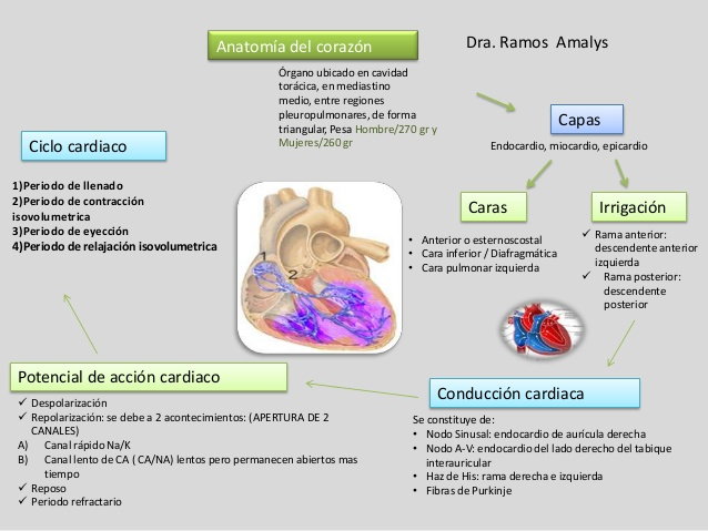 mapas-conceptuales-anatoma-y-fisiologa-del-corazn-3-638