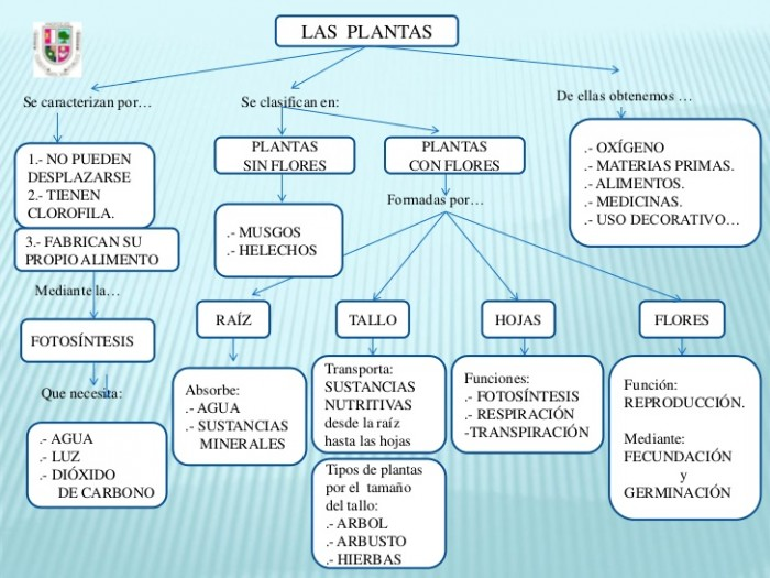 plantas-mapa-conceptual-espaol-36-728
