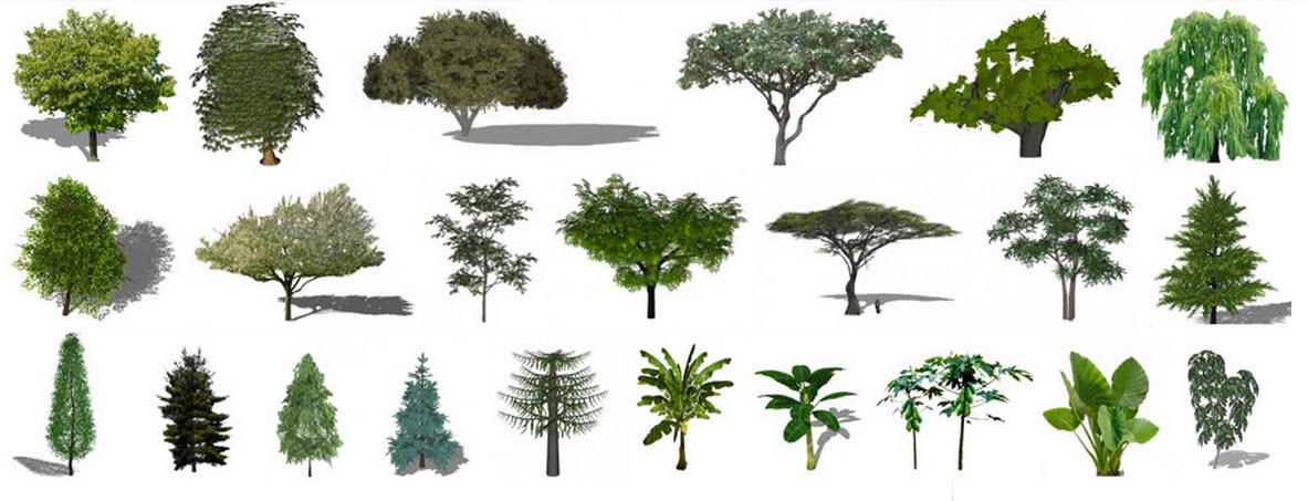 árboles-para-Sketchup