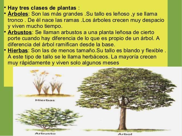 arboles-hoja-caduca-y-perenne-2-638