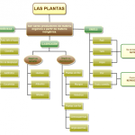 Cuadros sinópticos sobre las plantas: Clasificación y tipos