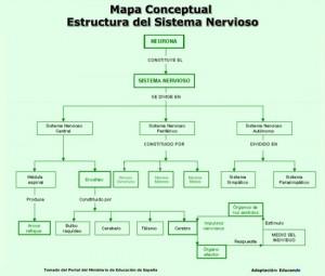 mapa_estructura_sistema_nervioso