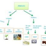 Cuadros sinópticos sobre los árboles y sus funciones