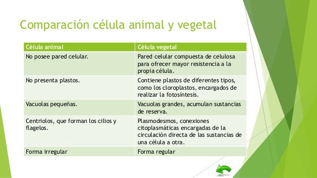 Cuadro Comparativo Entre Celula Animal Y Vegetal Wikipedia