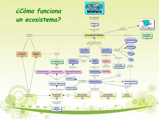 Cómo-funciona-un-ecosistema