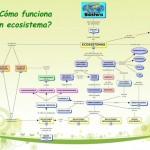 Cuadros sinópticos sobre Ecosistema y mapas conceptuales sobre ecosistemas
