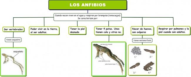 Los anfibios.cmap