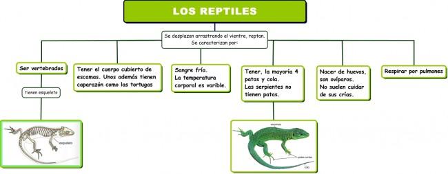 Los reptiles.cmap