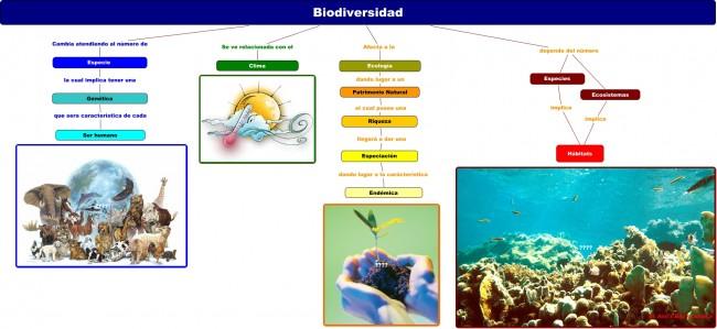 Mapa conceptual biodiversidad 1.cmap