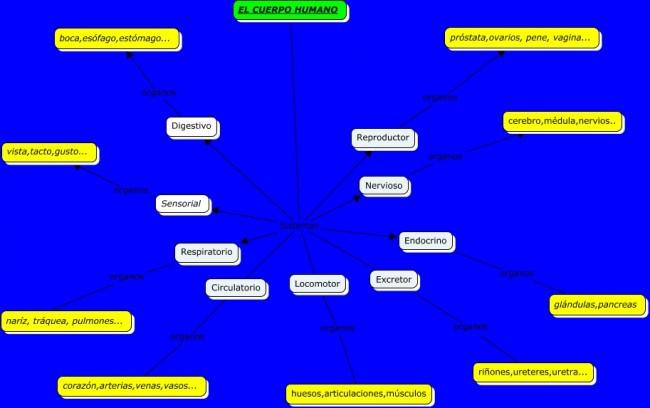 Mapa conceptual del cuerpo humano.cmap