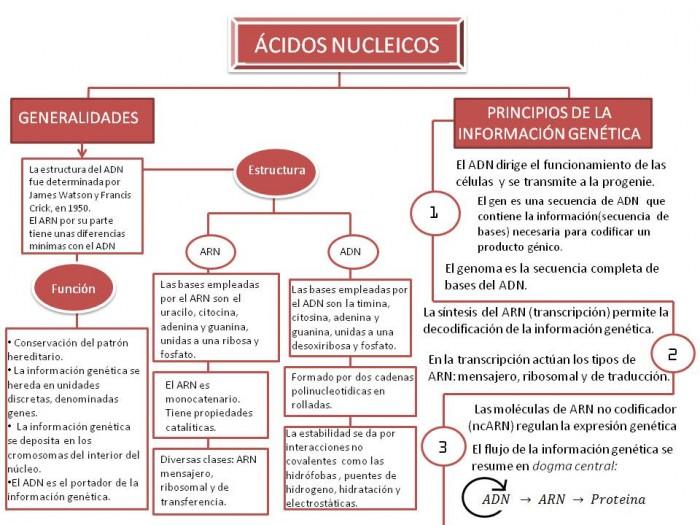 Mapa+conceptual.+Ácidos+Nucleicos