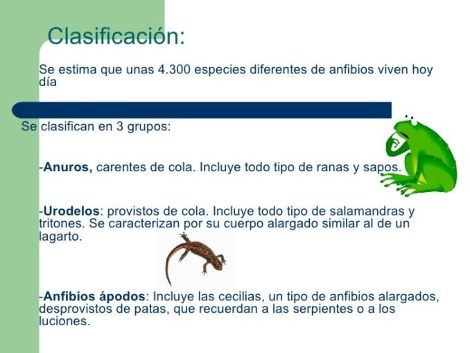 anfibios-4-728
