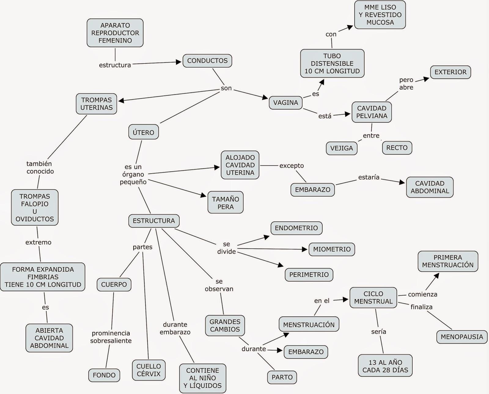 Mapas mentales y cuadros sinópticos sobre el aparato reproductor ...