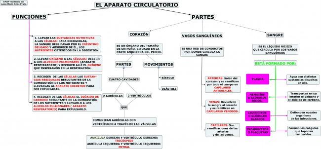 el-sistema-circulatorio