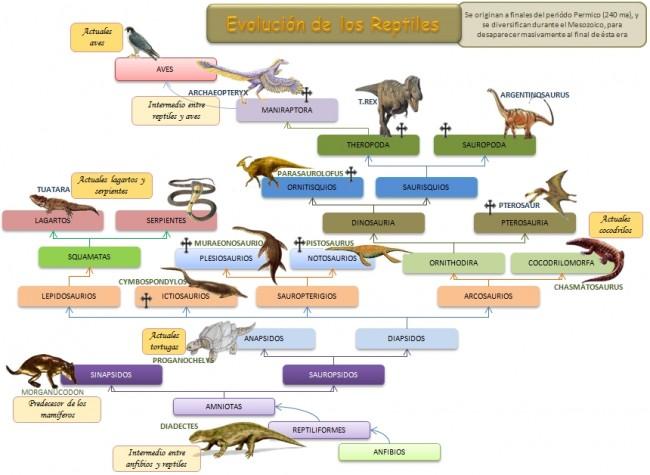 esquema-evolucion-reptiles