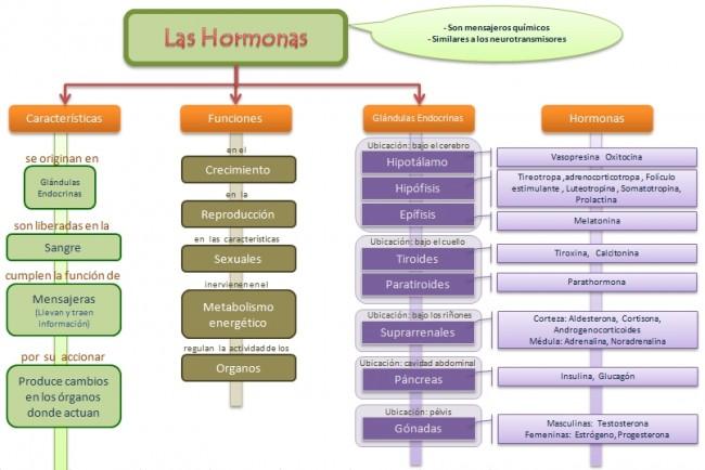 esquema-hormonas